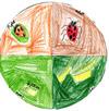 Ladybug_circle041_8